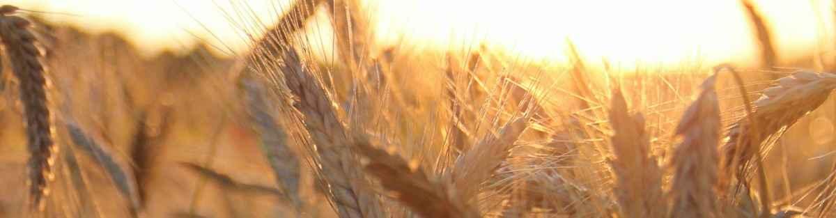Cómo Hacer un Currículum de Agricultor: Ejemplos y Guía